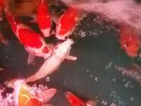 Ikan-ikan Ini Diberi Kokain, Yang Terjadi Selanjutnya Sungguh Mengejutkan