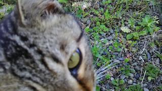 至近距離から見つめるキジトラ猫