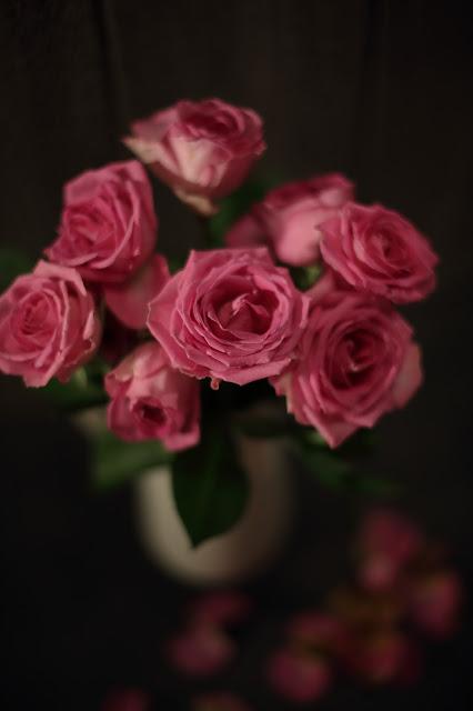 stillkuva ruusu