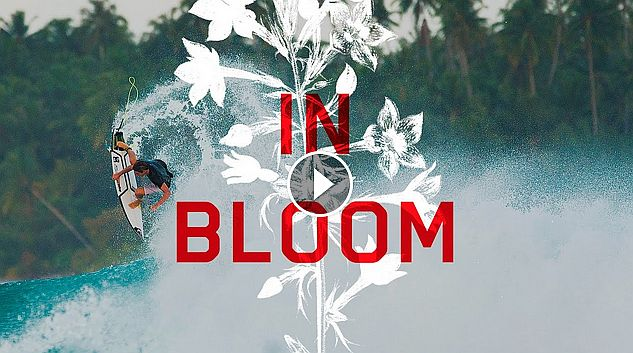 In Bloom Leo Fioravanti Part 2