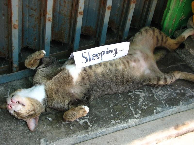 Спящий кот на спине