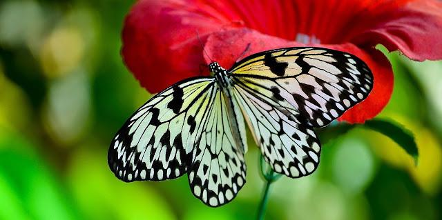 imagen hermosas mariposas