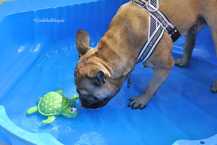 Schwimmspielzeug für Hunde