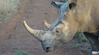 Swaziland Mkhaya Réserve Rhinocéros