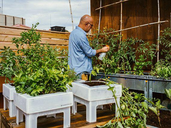 que mejor se adapten al espacio disponible en tu terraza o patio aqu te contamos qu debes tener en cuenta para que todo vaya bien desde el inicio - Huertos En Terrazas