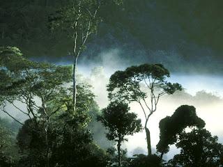 hutan basah, Ekosistem Darat Dan 6 Bioma