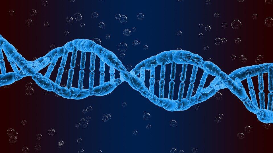 ДНК и гены долголетия, ума, старения, любви