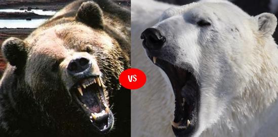 Grizzly vs Polar Bear