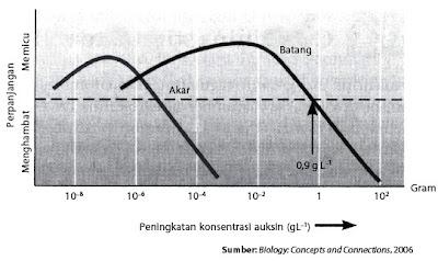 Pengaruh konsentrasi auksin terhadap pertumbuhan akar batang