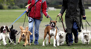 Dog walking insurance