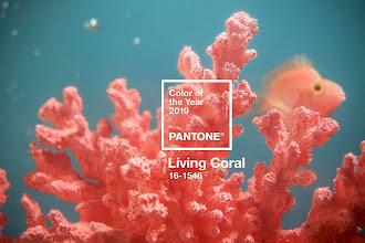 Barva roku 2019, Living coral