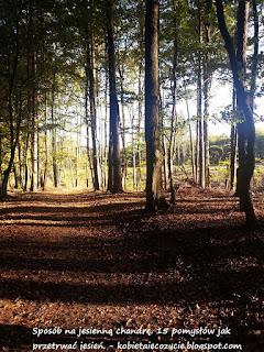 polubić jesień, piękna polska jesień, sposób na jesienną chandrę, jesienna depresja, co robić jesienią, 15 pomysłów jak przetrwać jesień;
