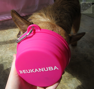 Jada checking out a travel bowl from Eukanuba