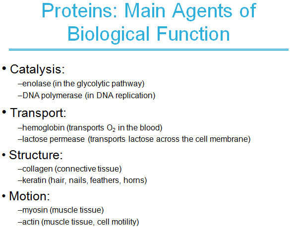 catalysis,Amino acids ,peptides ,proteins