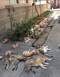 gatti sdraiati a terra