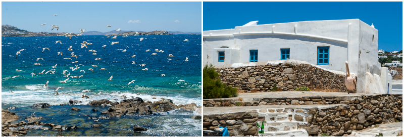 Famous pelican and seagulls flying above the sea in mykonos town collage image