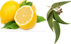 Lemon eucalyptus Natural Home Remedies to Get Rid of Mosquitoes