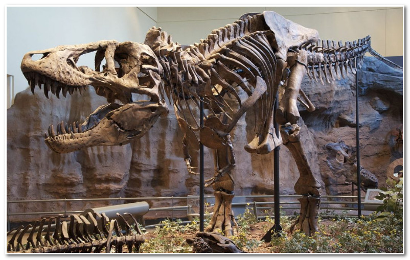 """تارودانت24   / إكتشاف حفريات سلالة جديدة من الديناصورات يرجع تاريخها إلى """"ما قبل 180 مليون سنة """""""