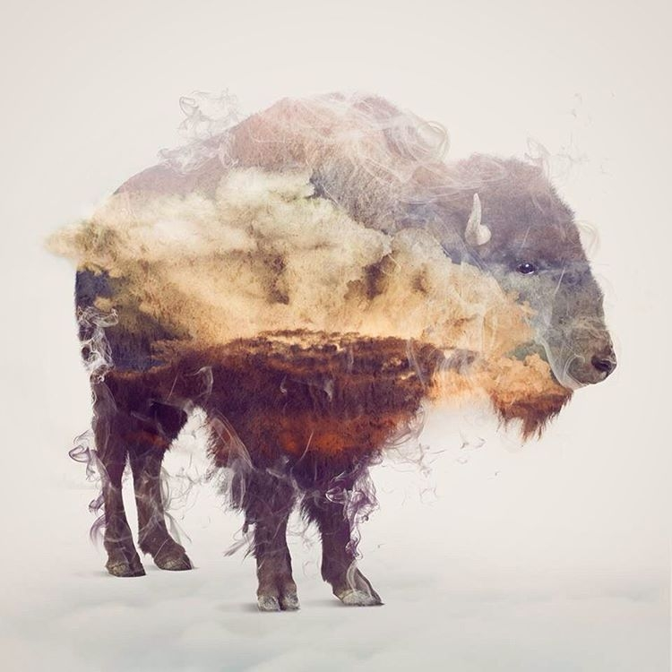 08-Bison-Daniel-Taylor-Ghostly-Animals-in-Manipulated-Photographs-www-designstack-co