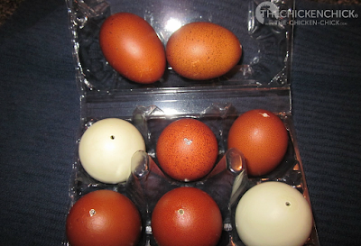 How to blow, clean and dry egg shells