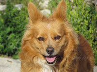 pas slike otok Brač Online