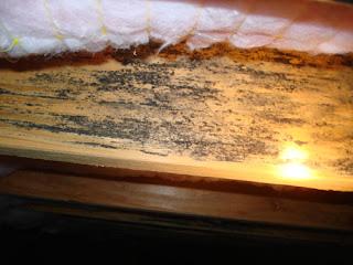 HandyPro Handyman Services Fungus On Floor Joists