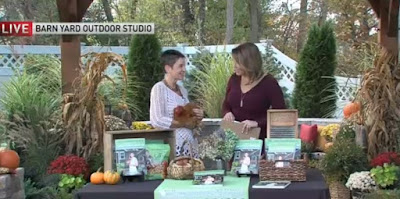 The Chicken Chick on NBC Connecticut, What you Need to Keep Chickens at Home, October 23, 2017