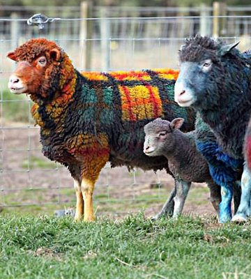 Funny Sheep Pictures Funny Animals