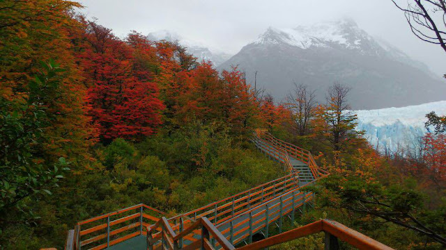 El Calafate durante o outono