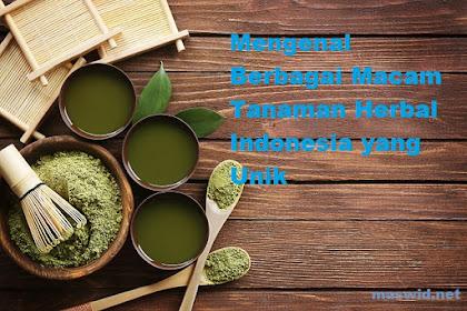 Mengenal Berbagai Macam Tanaman Herbal Indonesia yang Unik