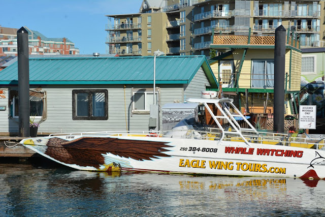 Fishermans Wharf Victoria Island eagle wing