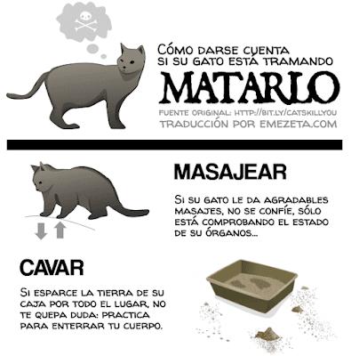 Como darse cuenta si tu gato está intentando matarte