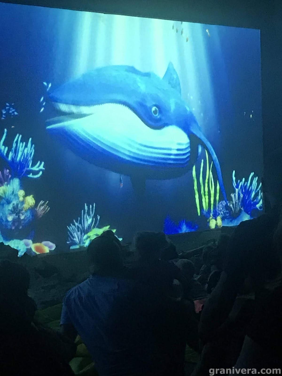Sarbsk-fokarium-wieloryb-błękitek