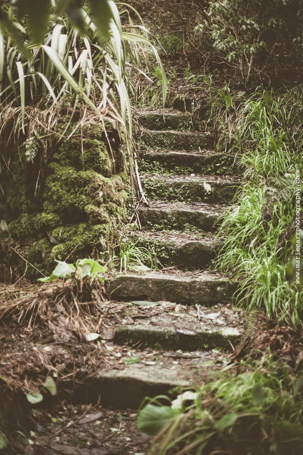 Secret steps in the Gardens of Glenveagh Castle, Co. Donegal, Ireland