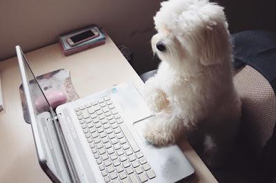 perro maltes motivado