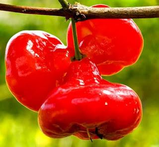Gambar Jambu Air Merah Buah Buahan Segar