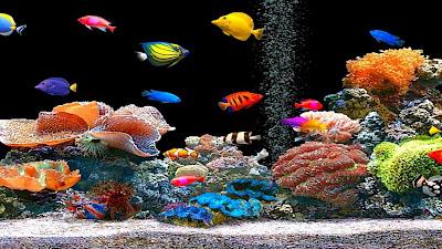 Peixes coloridos FHD