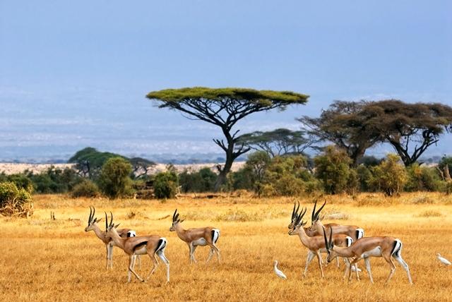 foto padang savana afrika