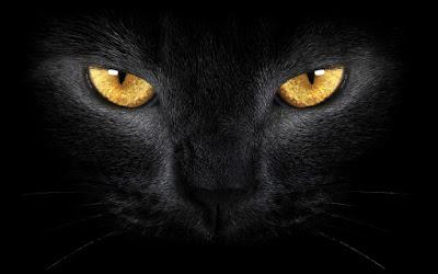 رعب,جن,قطة,سوداء,موت,سحر,اتفاق