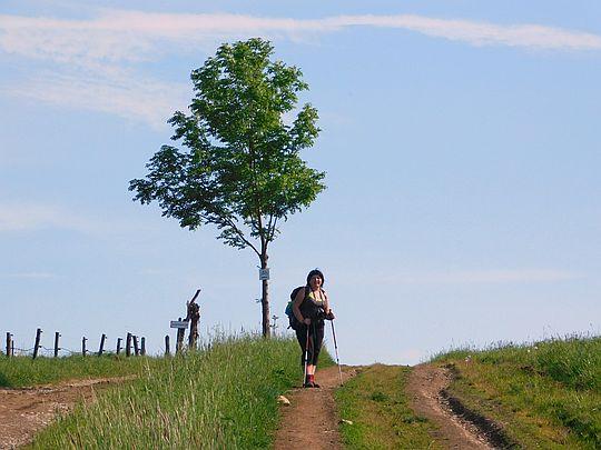 Przełęcz Komarnicka (662 m n.p.m.).