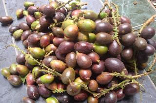 Manfaat buah matoa untuk kesehatan