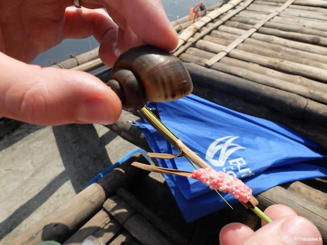 reserve van long ninh binh vietnam campagne baie halong terrestre bateau barque bambou sampan oeufs escargots