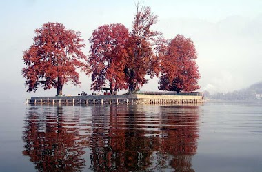 Travel in the Cedar Fragrance of Kashmir