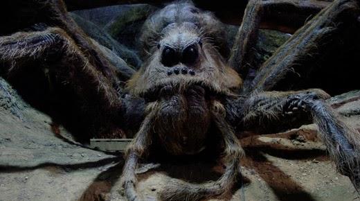 Las arañas gigantes podrían existir en el Congo