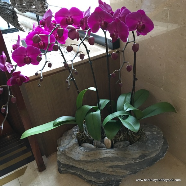 orchids at Fleur de Chine, Sun Moon Lake hotel