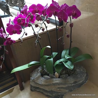 orchids at Fleur de Chine, Sun Moon Lake hotel