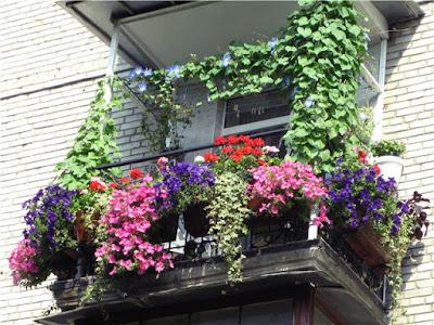 балкон, уквітчаний рослинами.