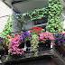 Квіти для балконів. Що садити