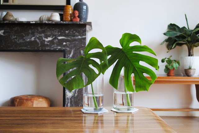 monstera blad vaas