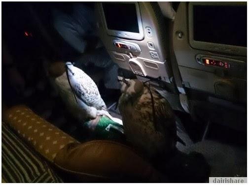 Terkejut Lihat Penumpang Pelik Dalam Penerbangan